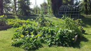 Garden Photo 08-25-2015